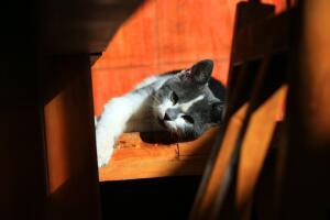 Есть ли совесть у кошек?