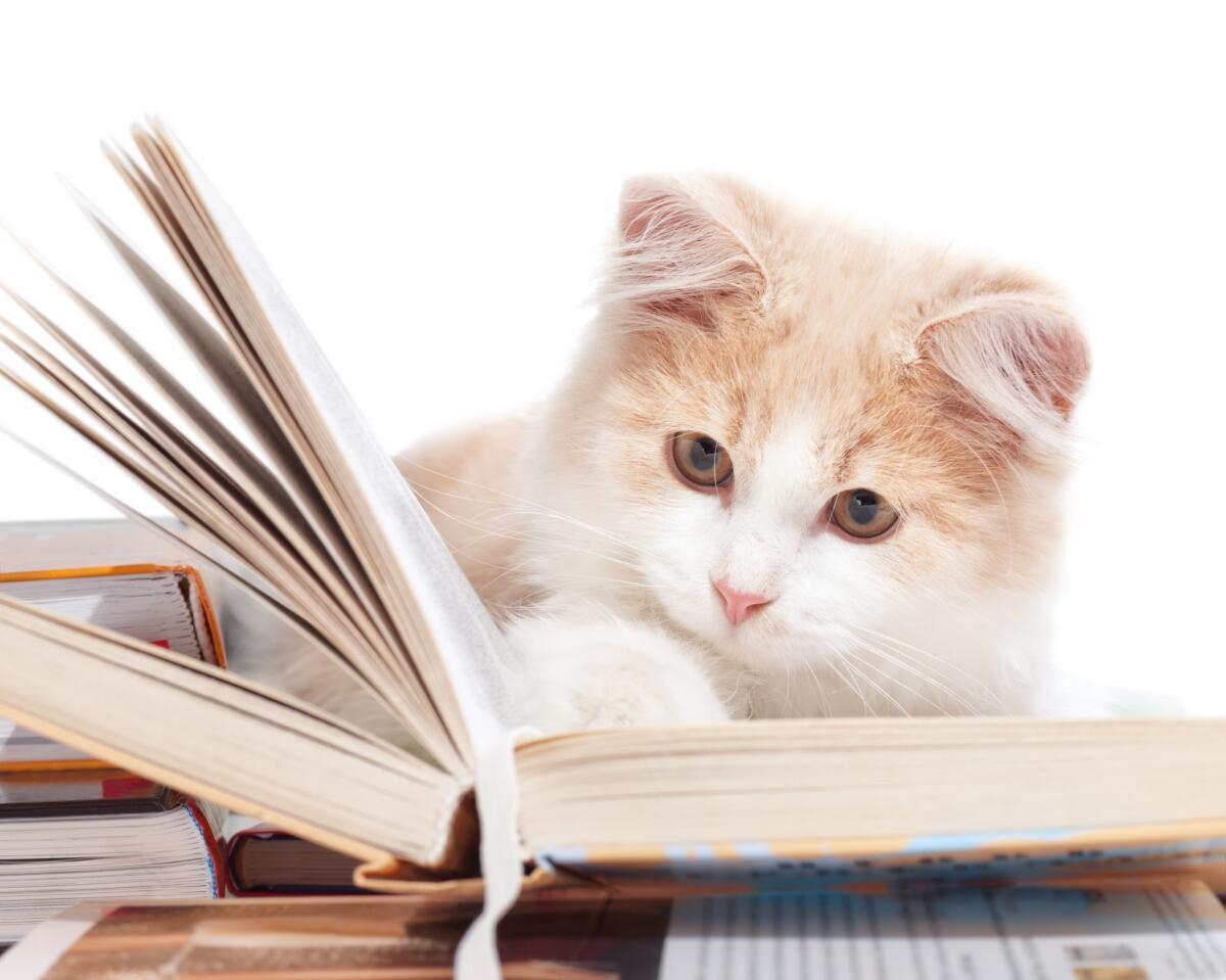 Был бы я кот ученый, сказки бы сочинял с моралями...