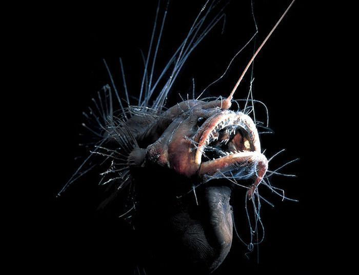 Рыбка из морских глубин
