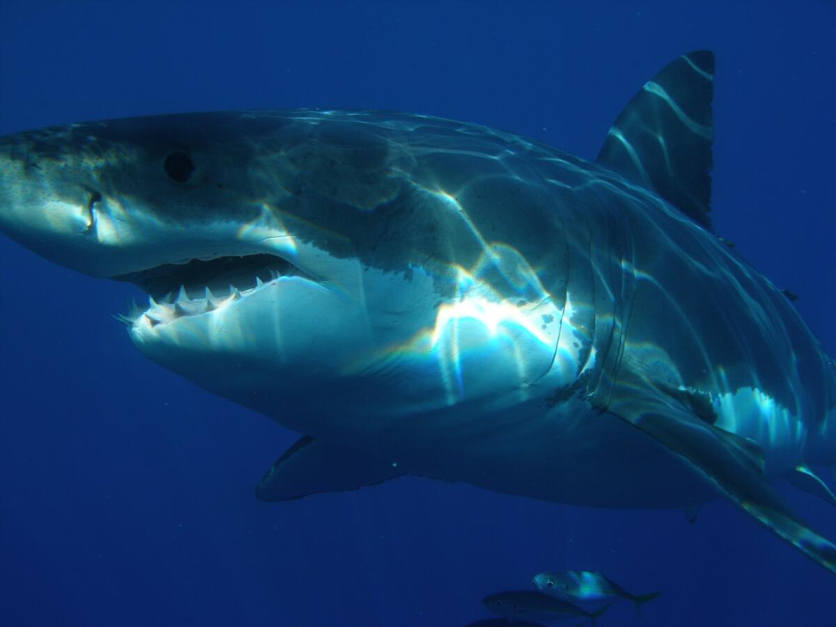 Современные акулы внушают ужас своим видом, что уж говорить про других неведомых нам монстров