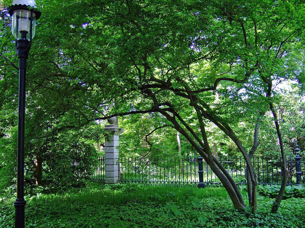 Падуб в ботаническом саду штата Миссури, США