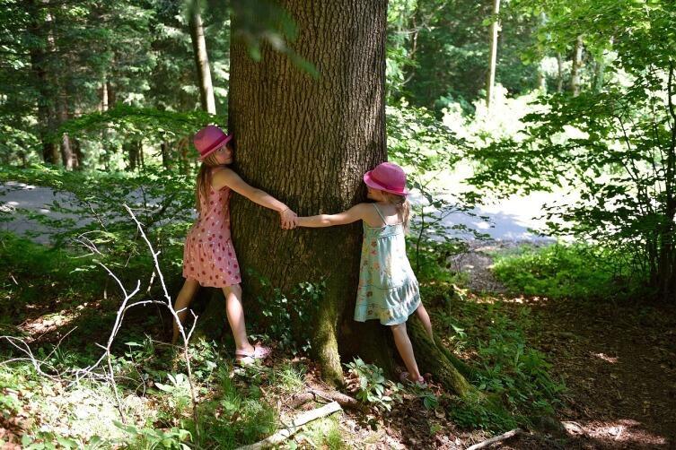 Мегаполис и природа. Как любить дерево?