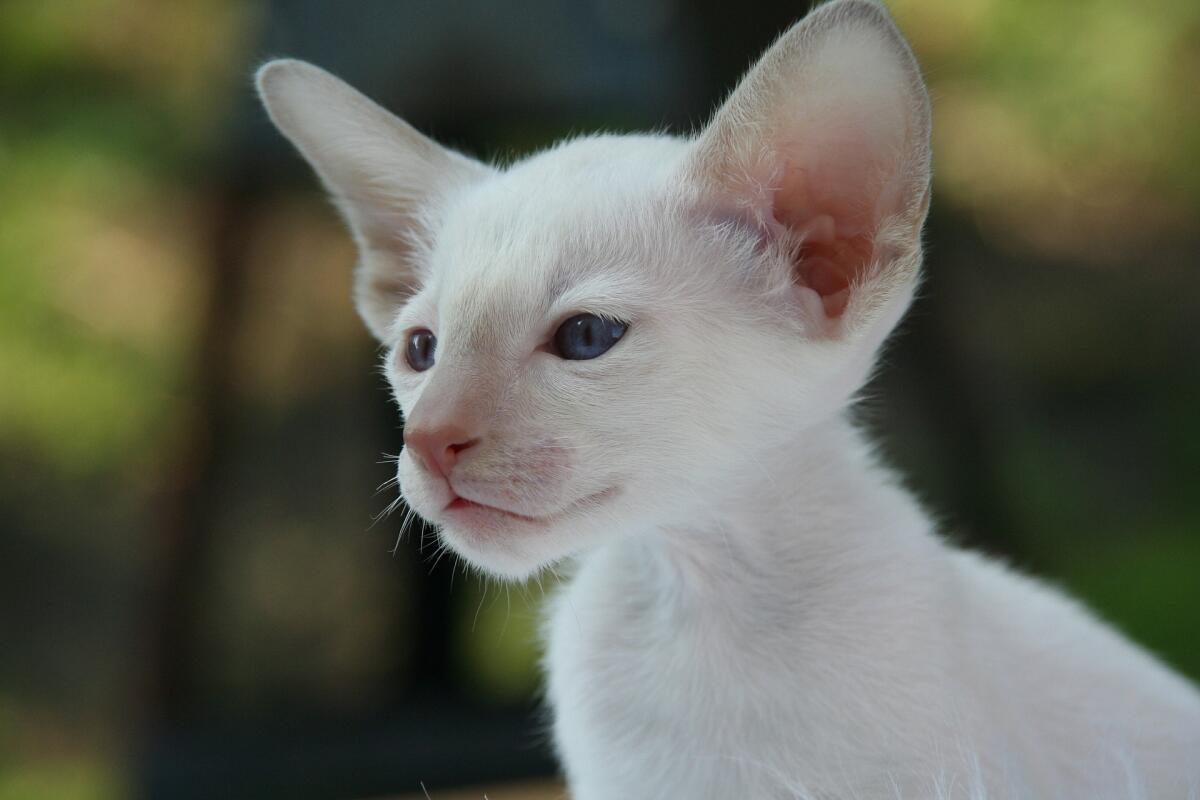 «Правдолюбивая Кошка, Получающая Персональную Пенсию, Презирающая Политических Проституток, Поступившихся Принципами…»