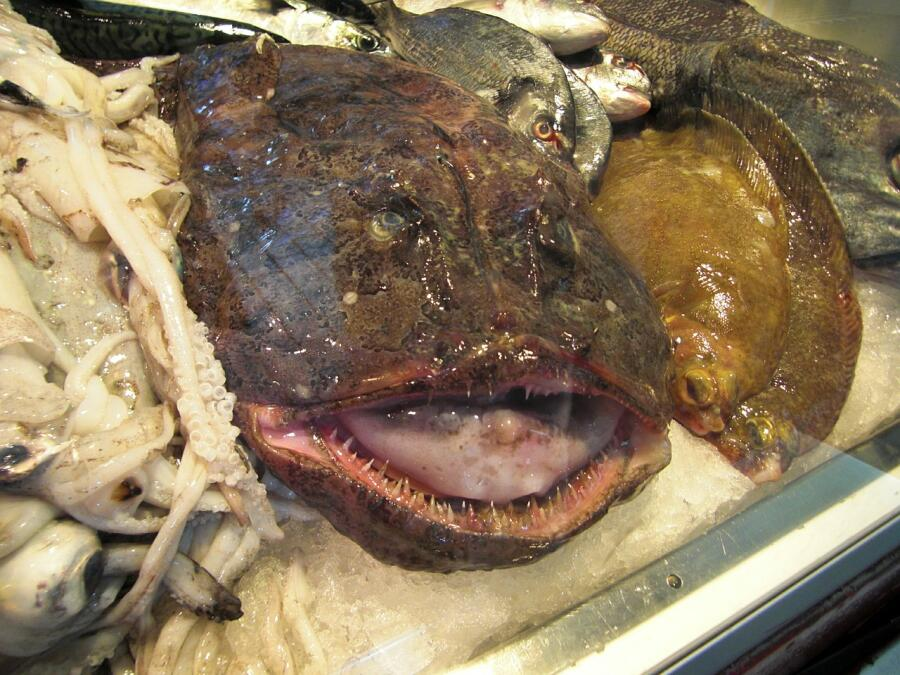 Морепродукты. Что готовят из морского черта?