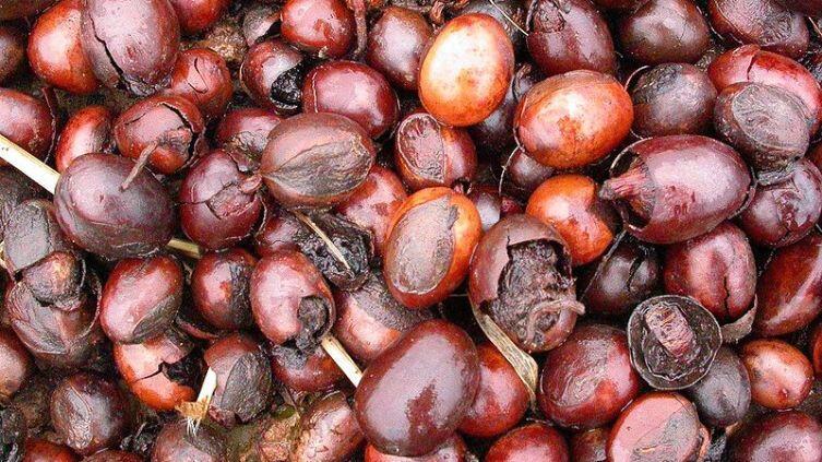 Семена дерева ши