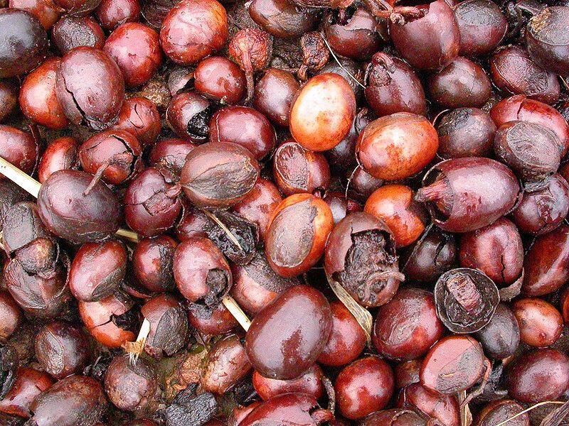 Почему дерево ши называют африканским чудом?