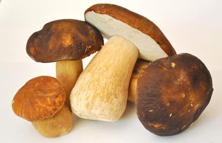 Что делать со свежесобранными грибами? Обрабатываем