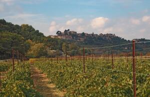 Какие вина делают в Провансе?