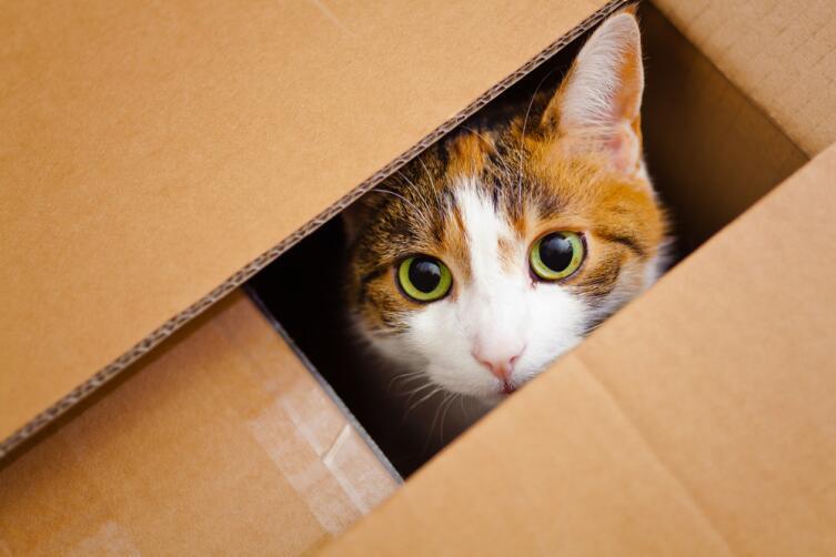 В чем преимущества профессионального переезда?
