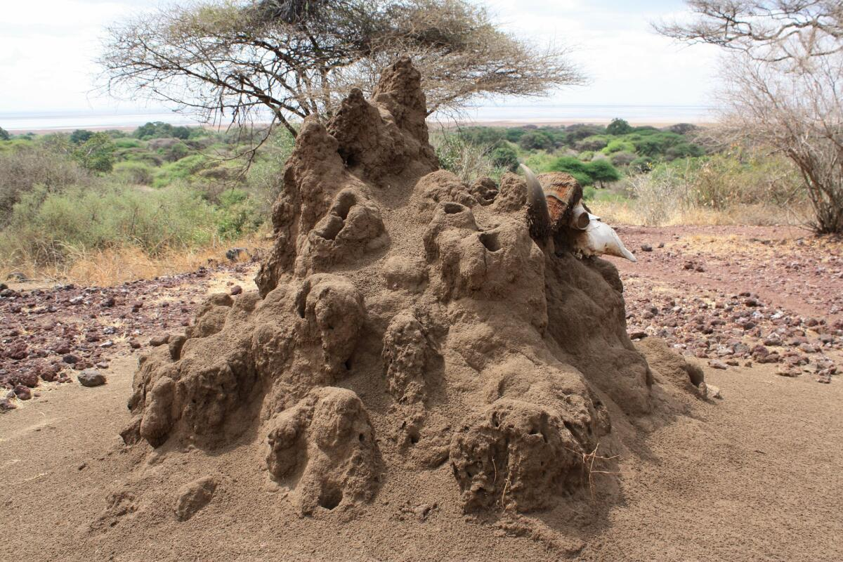 Термитник, Танзания
