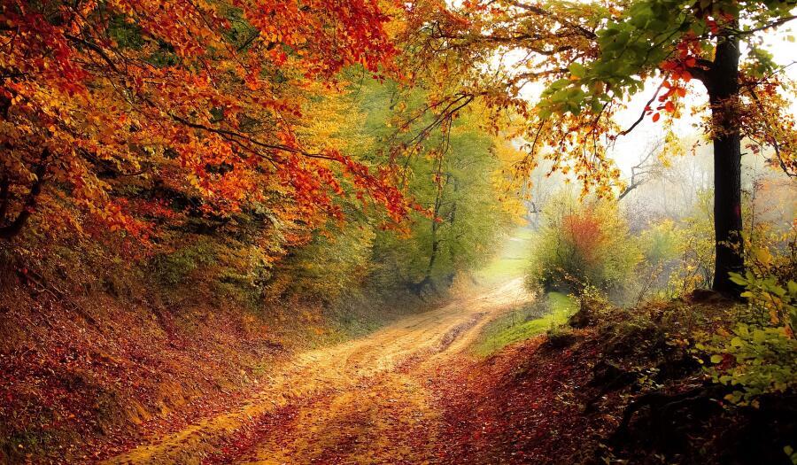 Почему не надо сгребать опавшую листву?