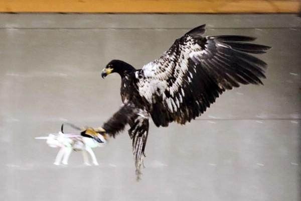 Установка имеет небольшие размеры, поэтому многие могут принять дрон за птицу