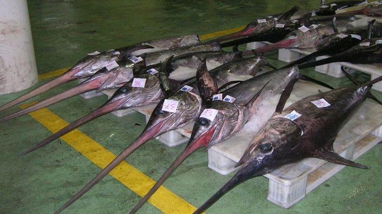 Рыбный аукцион в городе Виго, Испания