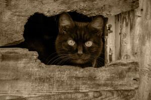 В Англии есть примета: если недалеко от невесты чихнет черная кошка, значит, замужество будет счастливым.