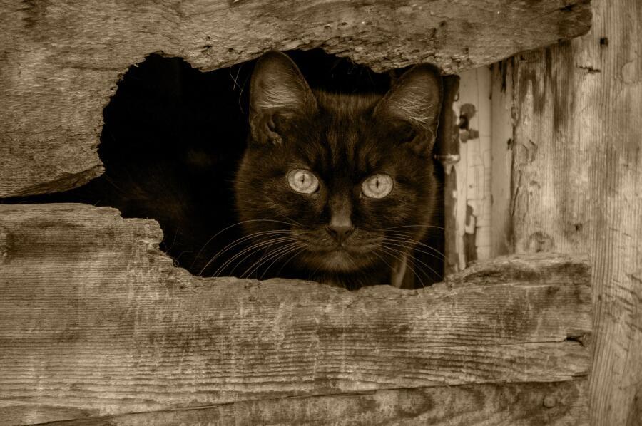 Если черная кошка перебежала дорогу, добра не жди…