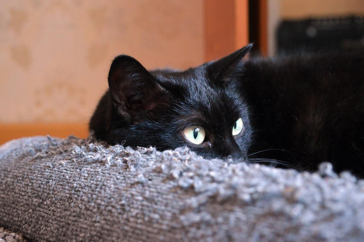 Если недалеко от невесты чихнет черная кошка, значит, замужество будет счастливым
