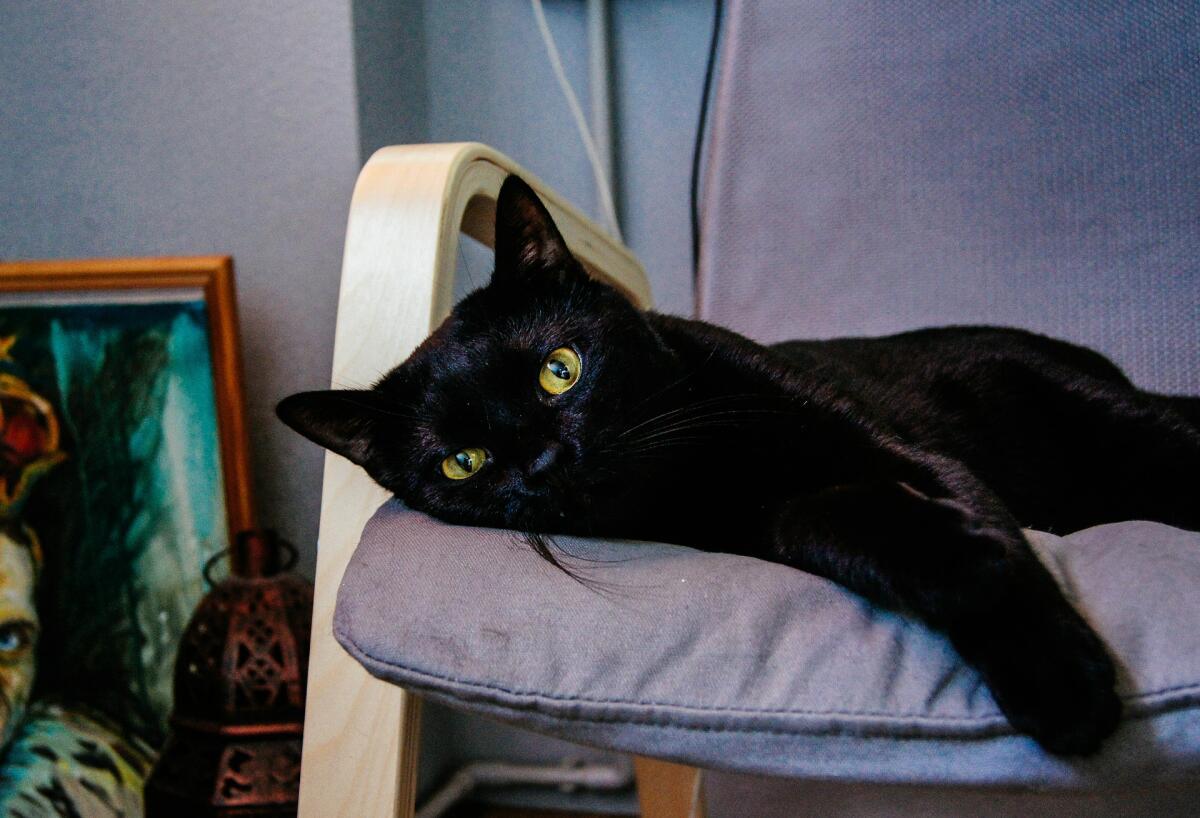 В XIX веке Россия торговала кошачьим мехом