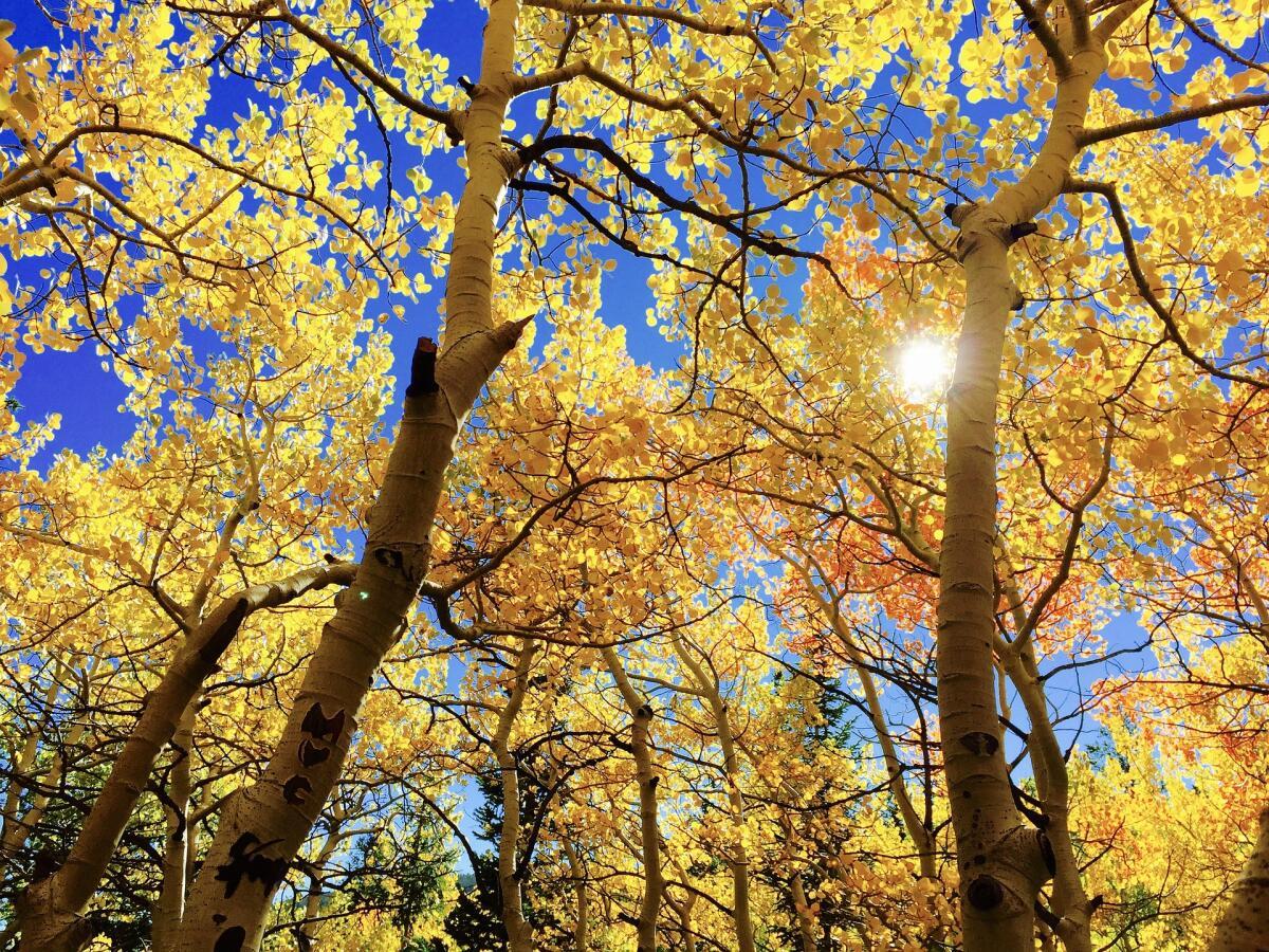 Осень— пора тоски