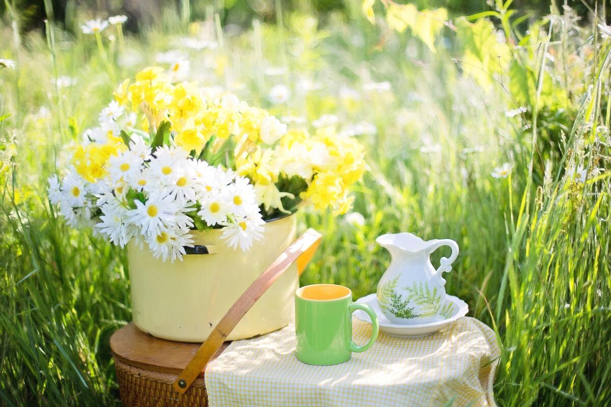 Чай из кипрея обладает антисептическими свойствами, поэтому является эффективным средством в профилактике воспалений