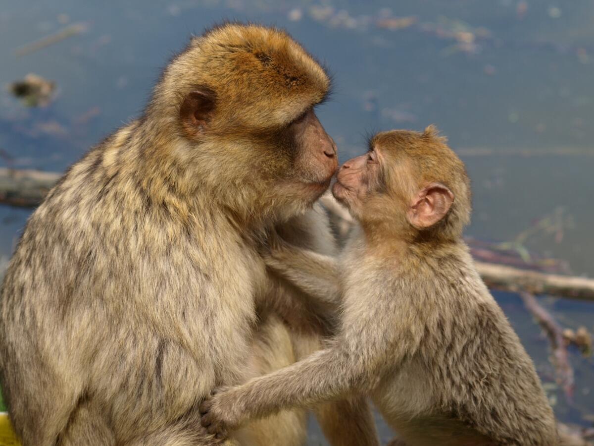 В животном мире каждый индивид знает, кто сильнее его самого и кто слабее