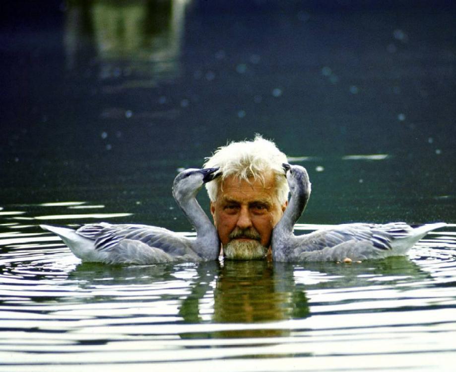 Конрад Лоренц с подопытными серыми гусями