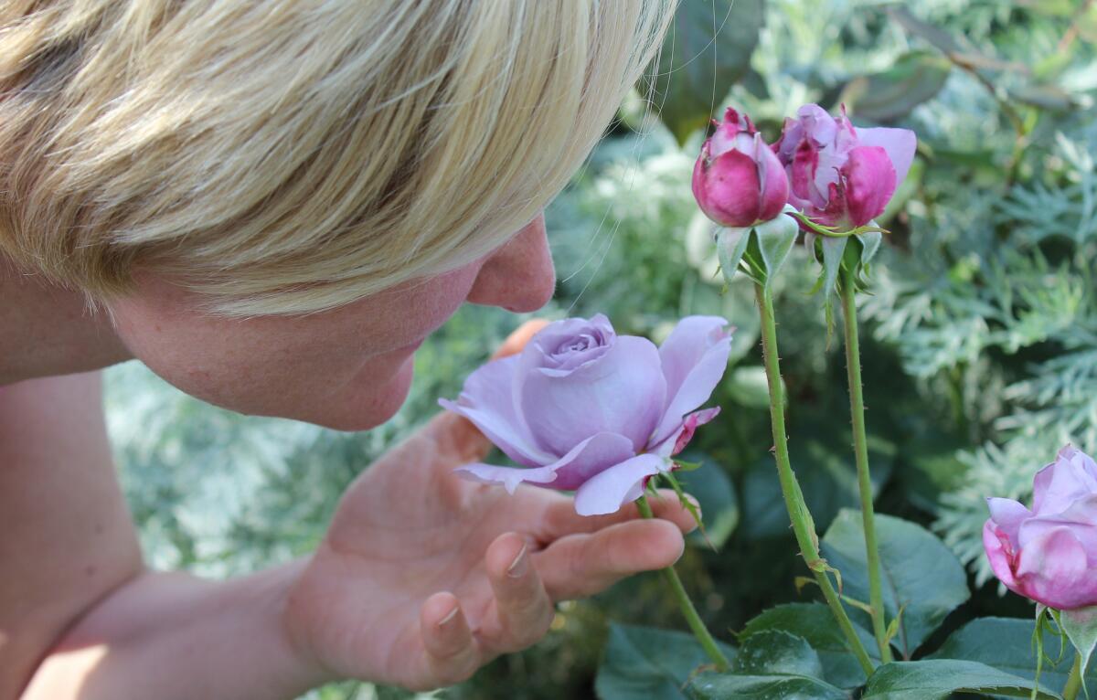Розы очень чувствительны к эмоциям человека