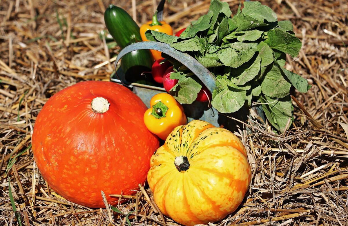 Овощи богаты клетчаткой