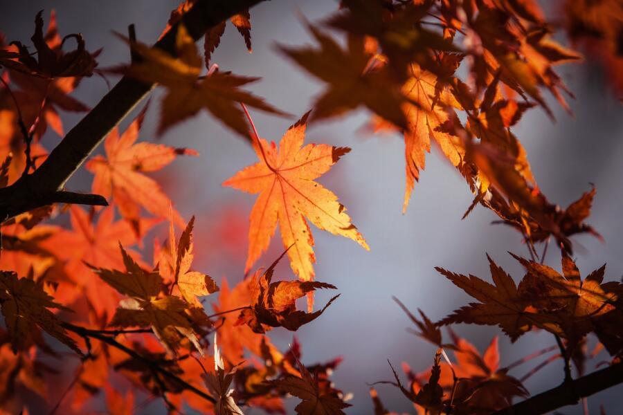 Осенняя слякоть пройдет, сменяясь чистым белым снегом