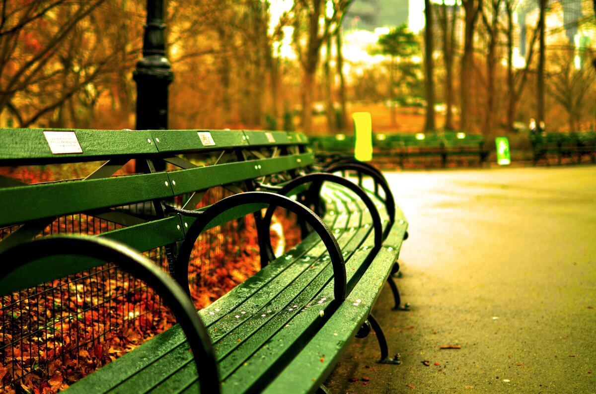 Осенний парк под дождем удивительно красив