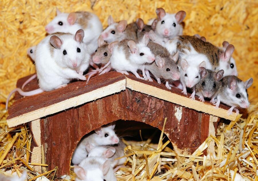 На картинке мышки выглядят вполне мило