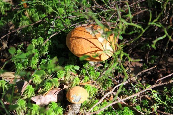 Чем прекрасен грибной сезон?