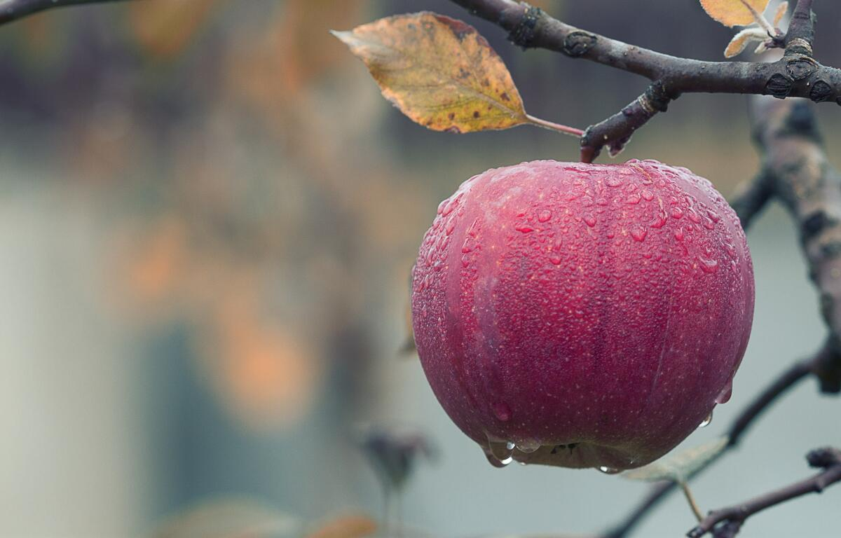 Всех историй про яблоки и не вспомнишь...