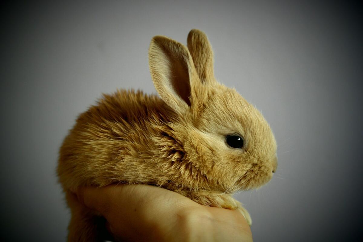 Кролик-малыш