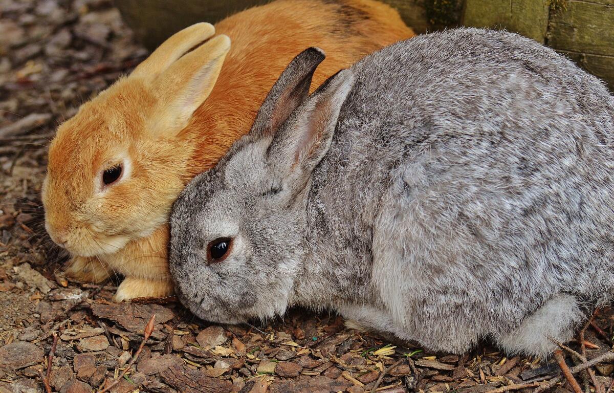 Кролики любят грызть провода