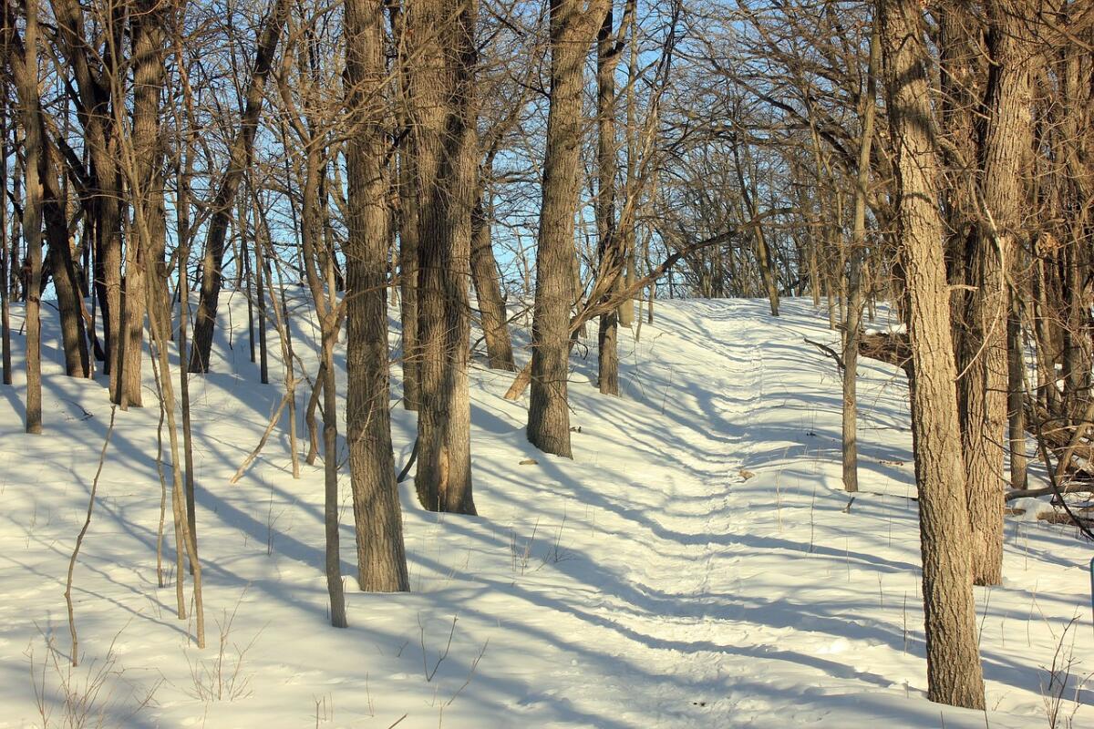Зимняя пробежка не менее чудесна, чем летняя
