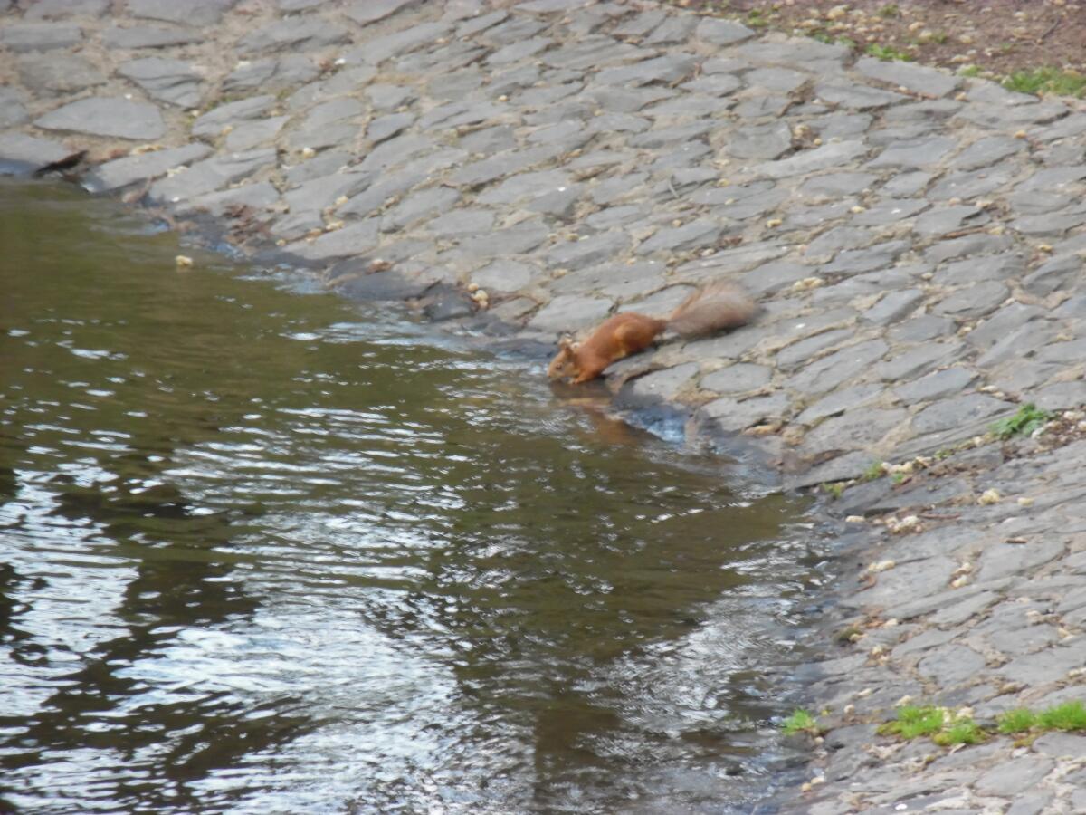 Белка у воды