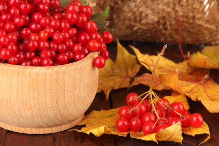 Ягоды калины осенью приобретают яркий красный цвет