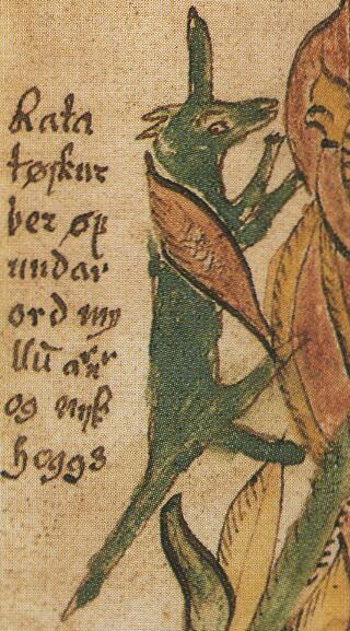 Белка Рататоск, фрагмент изображения из исландского манускрипта XVII века