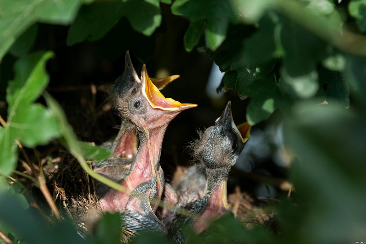 ДДТ особо пагубно действует на птиц