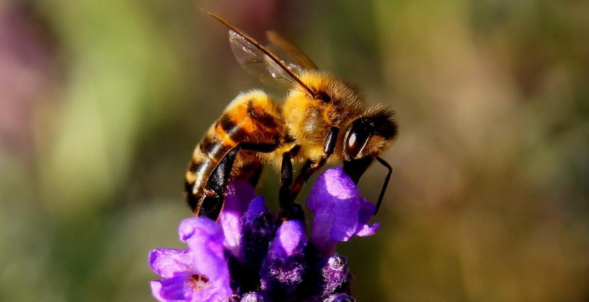От насекомых больше пользы чем вреда