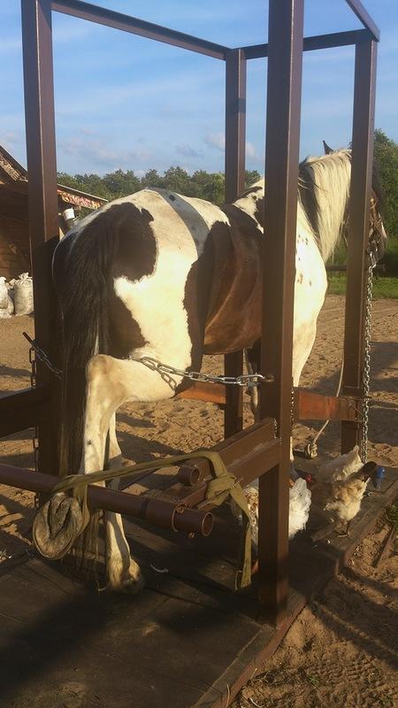 Станок для ковки лошадей