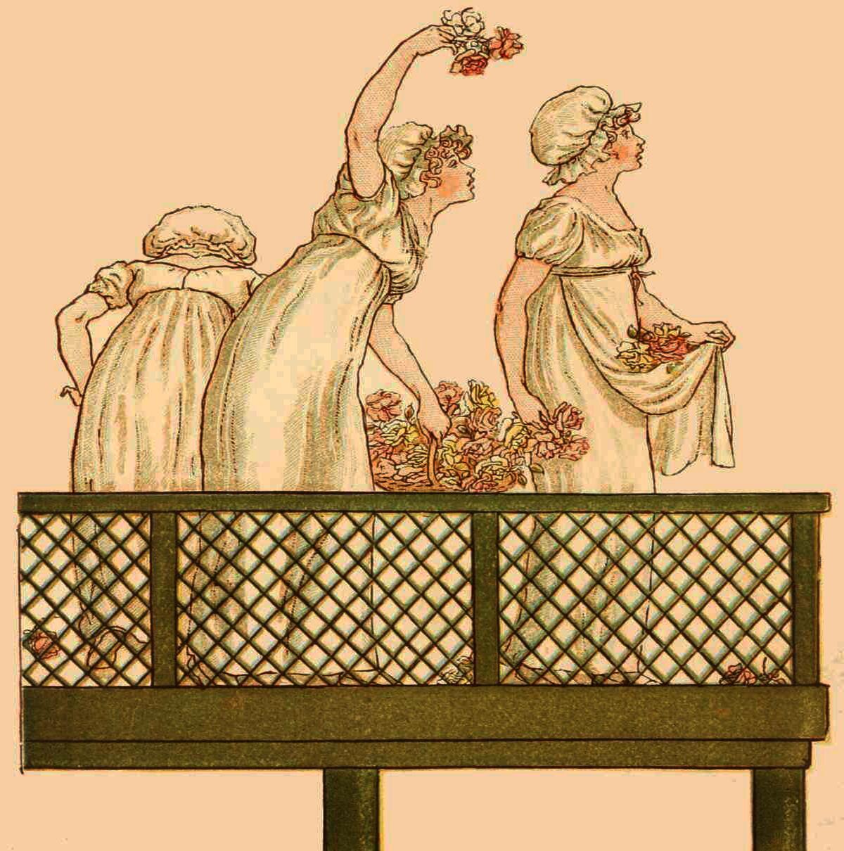Иллюстрация из книги «Язык цветов», худ. Кейт Гринуэй