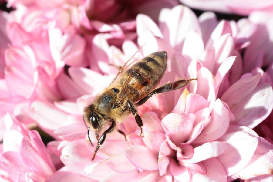 К здоровому питанию мед отношения не имеет
