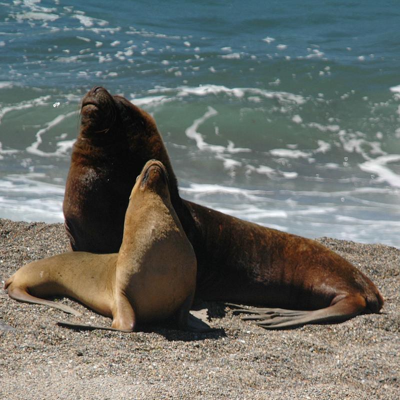 Смотреть секс у тюленей и моржов