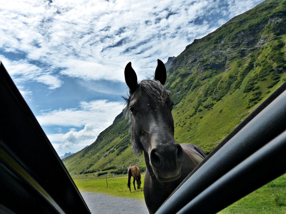 Лошадь на дороге - это вам не шутки!