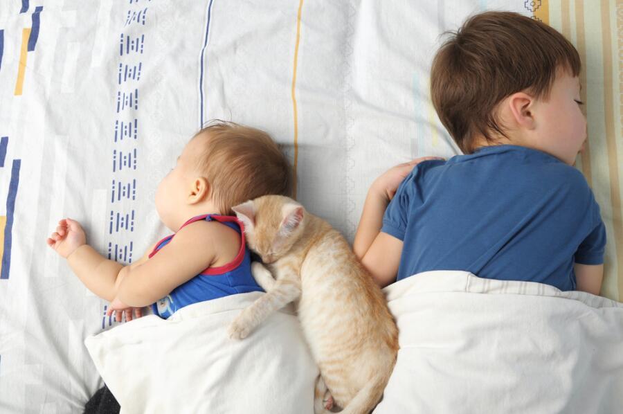 Много разных гостей могло наведаться к засыпающему ребенку