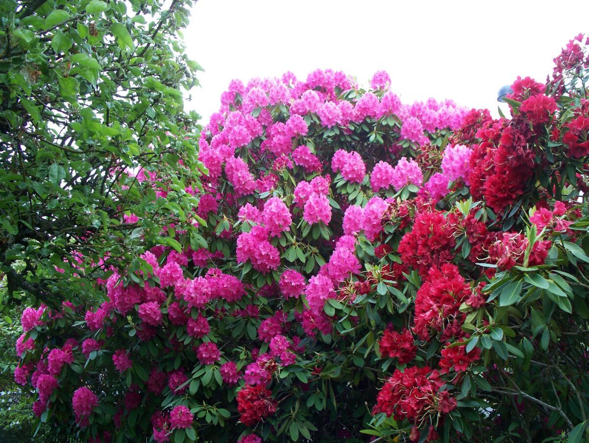 В сентябре цветут фруктовые деревья