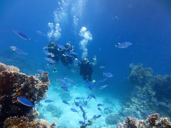 Дайвинг в Красном море. Как подружиться с подводным миром?
