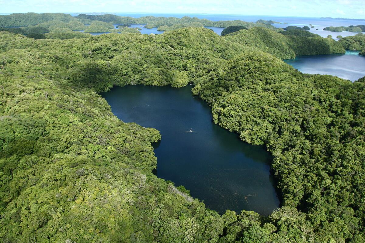 Озеро Медуз, вид с высоты птичьего полёта, Палау