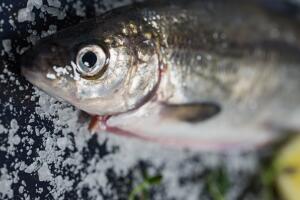 Рыбный день. Что можно приготовить из озерного сига?